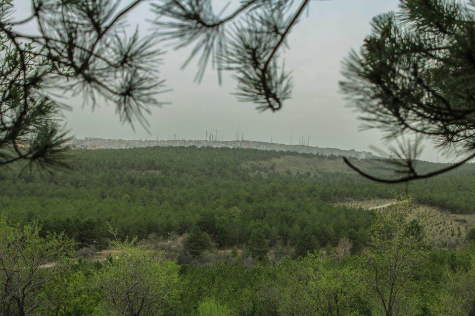 Forest Ankara